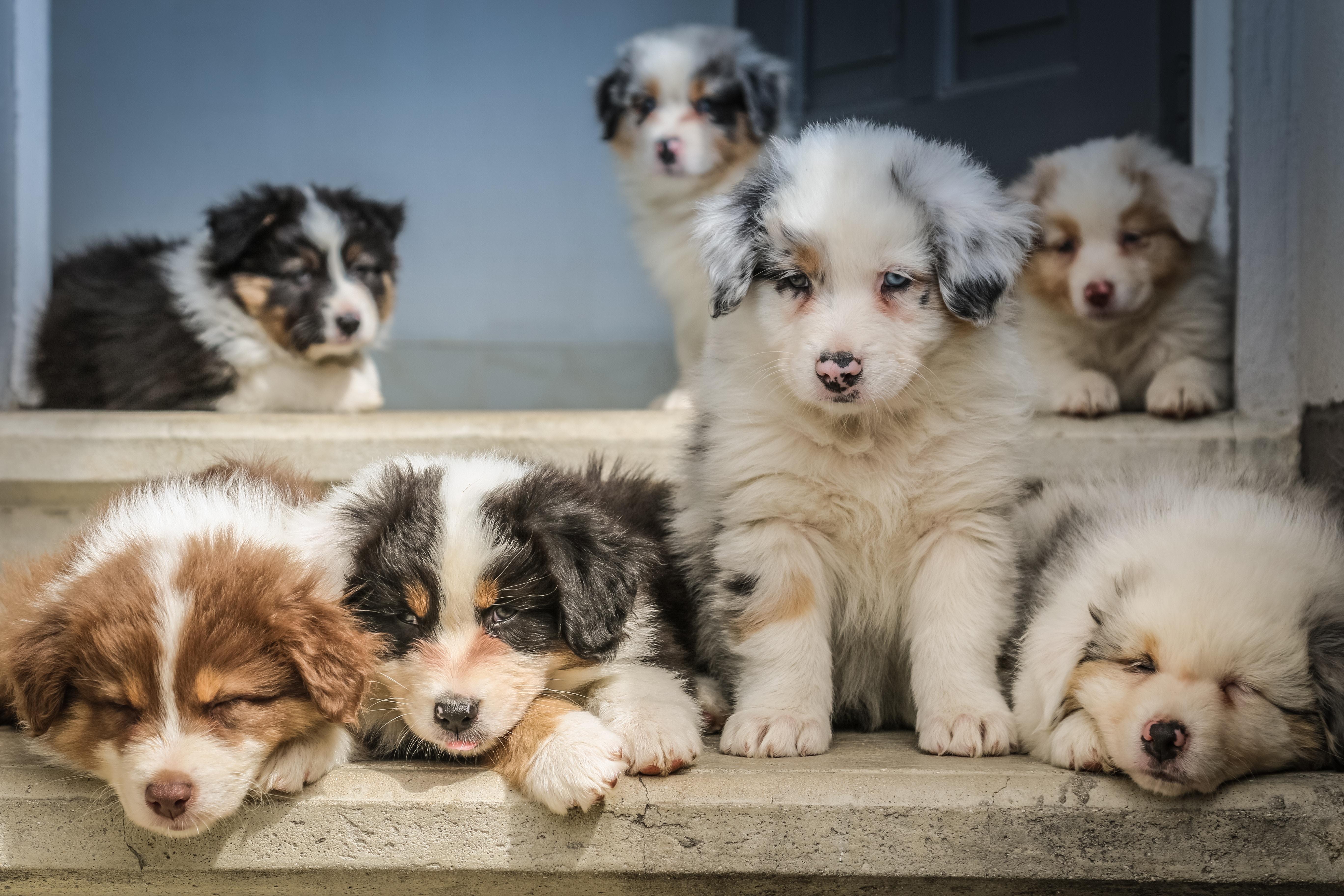 Godbidder til hunde i alle aldre