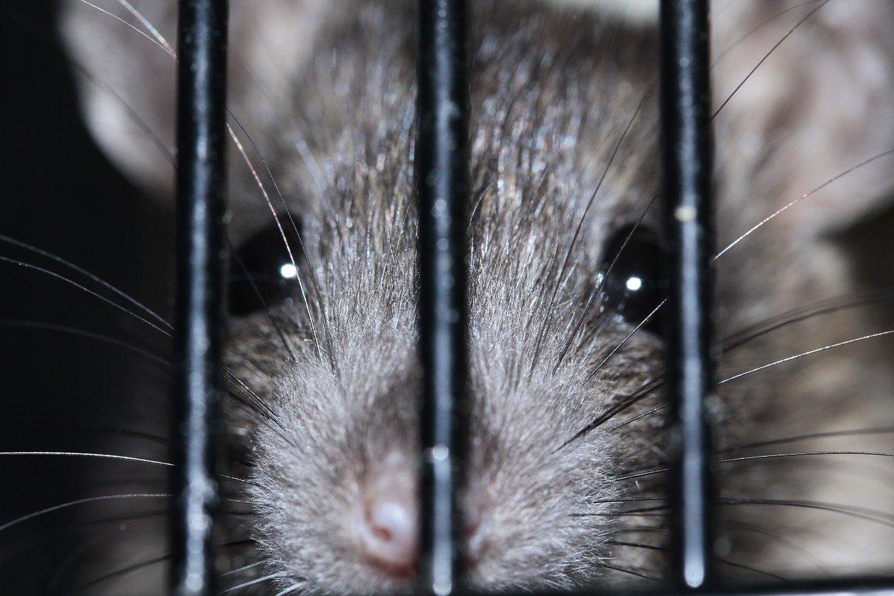 Undgå rotter med rottespærrer