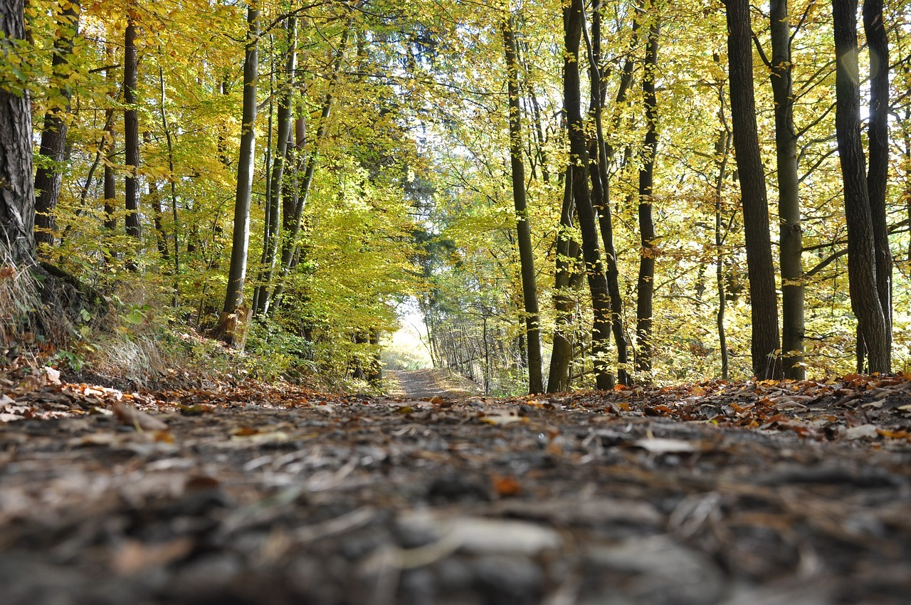 Ryd skovbunden med en skovl - eller brug en grenknuser